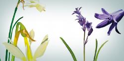 Tríptico Orquídeas y otras plantas bulbosas de Sierra Morena (Jardín Botánico El Robledo)