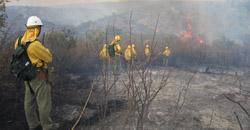 Boletín de Análisis y Seguimiento de Incendios Forestales