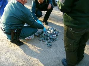 Junta y Guardia Civil investigan el uso de cebos envenenados en una finca de Jerez y detienen a una persona por colocarlos