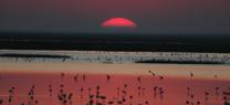 El Espacio Natural Doñana se amplía en 14.400 hectáreas para proteger toda la cuenca de la Rocina
