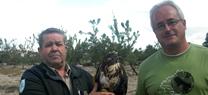 La Junta de Andalucía libera un ejemplar de águila