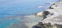 Almería acoge el III Encuentro Internacional sobre Conservación y Desarrollo Sostenible en el mar de Alborán