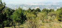 Medio Ambiente finaliza una nueva campaña de evaluación de las masas forestales andaluzas