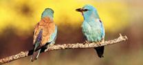 Andalucía celebra el Día Mundial de las Aves con actividades de iniciación a la ornitología