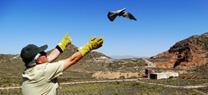 Agentes de Medio Ambiente de la Junta dejan en libertad 4 cernícalos y un búho real en el Parque Cabo de Gata-Níjar