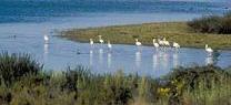 El Espacio Natural de Doñana recibe la visita de una misión de la Unesco, la UICN y Ramsar esta semana