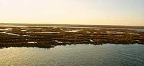 Marismas del Odiel abre las puertas del patrimonio arqueológico y ambiental de la Isla Saltés