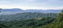 La Junta formaliza una inversión de 349.888 euros para la restauración ecológica de dos montes incendiados en Málaga