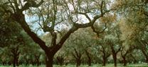 El Consejo Provincial de Medio Ambiente respalda el incremento de zonas protegidas en Córdoba