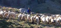 Medio Ambiente licita el mantenimiento de cortafuegos con pastoreo controlado a través del programa RAPCA