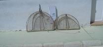 Agentes de Medio Ambiente de la Junta descubren cepos con red para la captura de perdices vivas en un coto de Lúcar, Almería