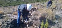 La Junta inicia la repoblación de 22,5 hectáreas de monte público de Gérgal con el Plan de Choque por el Empleo