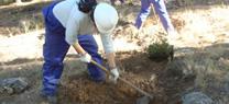 El Consejo inicia la elaboración de la estrategia para la generación de empleo medioambiental