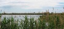 Medio Ambiente impulsa la redacción del proyecto de adecuación hidrológico-ambiental del río Adra en Almería