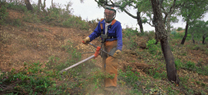 Un curso abordará la ejecución real de los tratamientos selvícolas  en el Centro de Capacitación y Experimentación Forestal de Cazorla