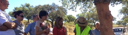 Los montes andaluces generarán este año alrededor de 129.000 jornales en las campañas de descorche