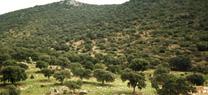 La Junta conmemora el Día Europeo de los Parques organizando actividades en varios espacios naturales