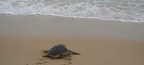 El Centro del Medio Marino de la Junta en Algeciras reúne a expertos en recuperación de tortugas de toda la península