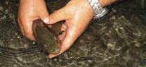 Medio Ambiente destina 500.000 euros en ayudas para el fomento de la acuicultura continental en Andalucía