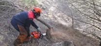 La Junta recupera el potencial forestal en 250 hectáreas de de montes públicos dañados por incendios en la provincia de Almería