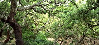 Medio Ambiente inicia el trámite de información pública de la ampliación del Parque Natural de Los Alcornocales