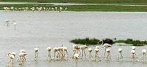 Medio Ambiente contabiliza más de 765.000 ejemplares de aves acuáticas de 95 especies diferentes en humedales de Andalucía