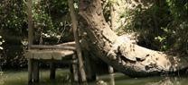 El Consejo declara 45 Zonas Especiales de Conservación de la red europea Natura 2000 en seis provincias