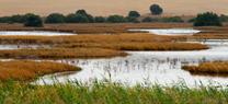 La Laguna de Los Tollos acoge hoy la Celebración del Comité Andaluz de Humedales para dar a conocer su restauración