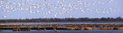 La Junta se muestra contraria al proyecto de almacenamiento de gas en el entorno de Doñana