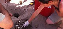Una tortuga boba desova 80 huevos en una cala cercana a San Juan de Terreros (Pulpí)