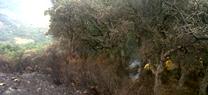 El Parque Los Alcornocales organiza la reforestación participativa de un monte incendiado en Algeciras