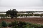 Jerez celebra un encuentro para analizar el pasado y futuro de la Laguna de Los Tollos, una de las más grandes de Andalucía