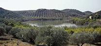 La Junta libera en la Laguna de Zóñar cuatro aves recuperadas en el CREA de Los Villares