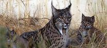 Medio Ambiente aprueba los programas de actuación de los planes de recuperación de especies de flora y fauna amenazadas