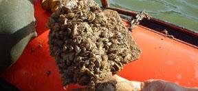 La Junta regula la pesca en tres embalses de Málaga para evitar la proliferación del mejillón cebra