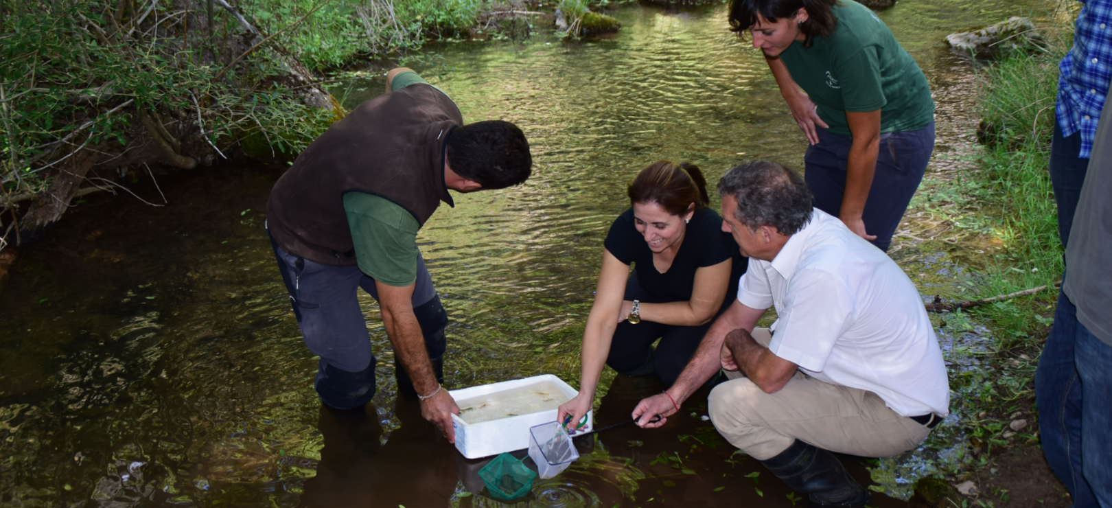 Medio Ambiente inicia las reintroducciones del cangrejo de río autóctono en aguas de Andalucía oriental