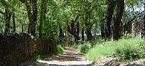 El Plan Infoca recupera para su uso el camino del Castaño del Robledo a Riotinto en Santa Ana la Real