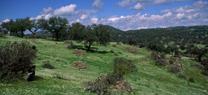 Nombrados los nuevos presidentes de las juntas rectoras de los parques naturales de Sierra de Andújar y Sierra Norte de Sevilla