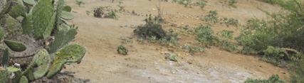 El Consejo de Gobierno aprueba el reglamento de suelos contaminados de Andalucía