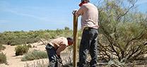 Medio Ambiente inicia los trabajos para preservar el tomillo carnoso en Marismas del Río Piedras y Flecha del Rompido