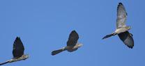 Amplio programa para celebrar el Día Mundial de las Aves en los espacios protegidos de la provincia de Huelva