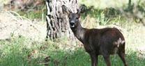 Medio Ambiente libera dos ejemplares de corzos andaluces en el Parque Natural Sierra de Huétor