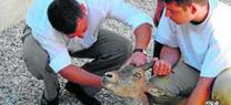 """La Junta recupera en el Centro de Recuperación de Especies Amenazadas almeriense """"Las Almohallas"""" 1905 animales amenazados durante 2015"""