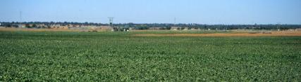 Sector agrícola de la provincia de Huelva