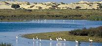La UNESCO reconoce por unanimidad la labor desarrollada por la Junta para conservar los valores universales de Doñana