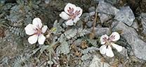 Medio Ambiente colecta 188 muestras de flora silvestre para su conservación y reproducción de especies de interés