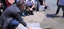 Medio Ambiente celebra el Día Mundial de la Migración de Peces con la suelta de 30 kilos de anguilas, especie en peligro crítico de extinción