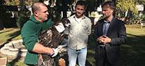 Medio Ambiente cede nuevos ejemplares de buitre negro para reforzar las poblaciones de la especie en Europa