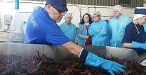 La Junta da luz verde a la Orden para asegurar la pesca del cangrejo rojo y posibilitar su control en Andalucía