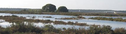 Medio Ambiente conmemora el Día Mundial de los Humedales con actividades en los espacios naturales protegidos